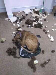 indestructible dog bed - not!