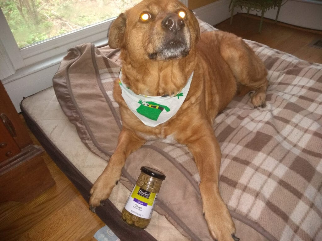 Can dogs eat olives_ Roxie wants to know
