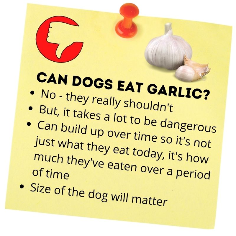 Can dogs eat garlic_