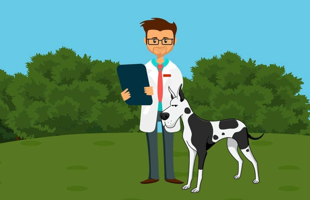Anxiety meds for dogs - veterinarian
