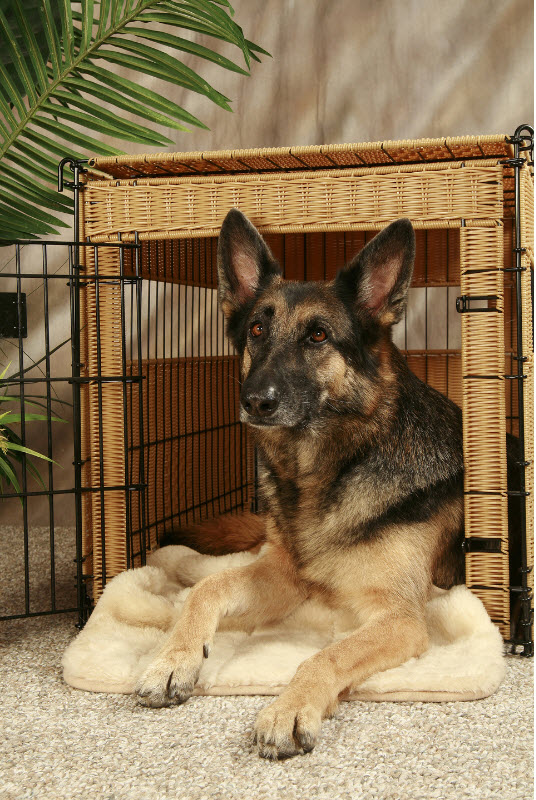 Crate training your dog with other dogs in the house