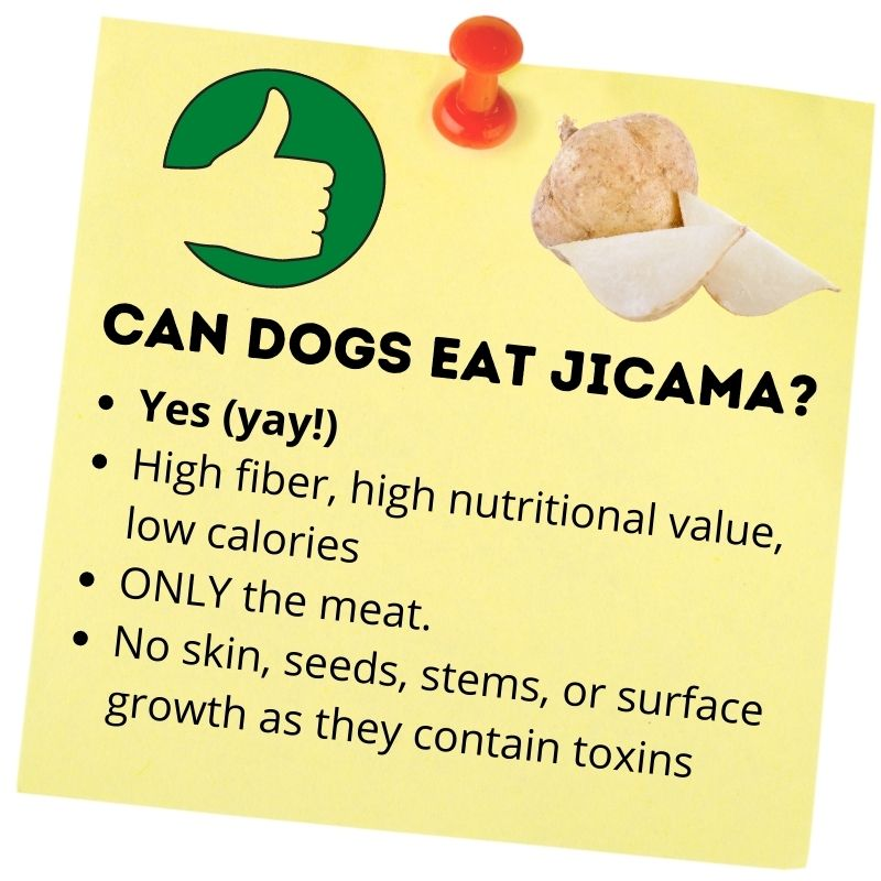 Can dogs eat jicama_